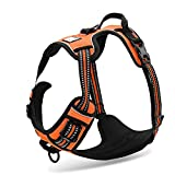 Chai's Choice Best Outdoor Adventure Dog Harness (Small, Orange)
