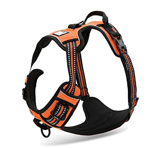 Chai's Choice Best Outdoor Adventure Dog Harness (Medium, Orange)