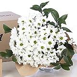 Ramo de Flores Margaritas Blancas | Entrega Gratis 24 horas, Flores Naturales a Domicilio Blossom® | Flores Frescas y Recién Cortadas a domicilio