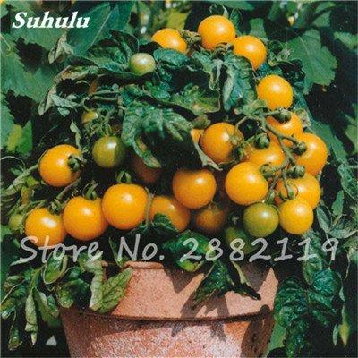 200 Pcs Précipité New Plantes d'extérieur Promotion Jardin Mini Sweet Cherry Tomate Graine pot Bonsai Balcon fruits légumes semences 2