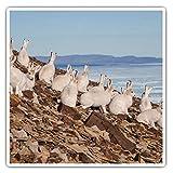 Impresionantes pegatinas cuadradas (juego de 2) 7,5 cm – Arctic Hare Group White Rabbit Hares Fun Decals para portátiles, tabletas, equipaje, reserva de chatarras, neveras, regalo genial #44142