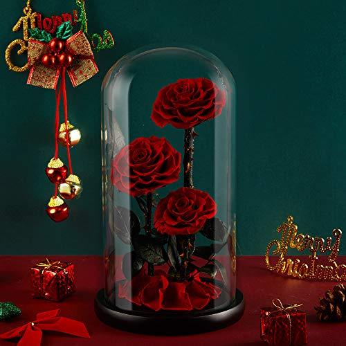 Eterfield Ewige Rose Handgemachte Immerwährende Echte Rosen Konservierte Blume in Glas Valentinstag Geburtstag Muttertag Thanksgiving Weihnacht Hochzeitstag Geschenke (Rote 3 Rose)