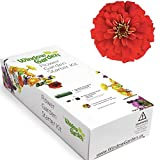Window Garden - Flower Starter Kit - Grow Your Own Beauty. Germinate Seeds on Your Windowsill Then Move to...