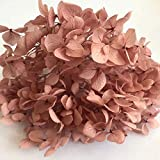 SSXCO 3 g/Lote Flores preservadas Frescas Naturales Cabeza de Flor de Hortensia Seca para Bricolaje Material de Flores de Vida eterna Real, 15