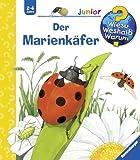 Marienkäfer Malen Und Basteln Bastelnmitkids