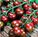 Adolenb Seeds House- 100 morceaux de tomates rares, demi-cigare d'hiver de Madère, tomates végétales savoureuses bio de jardinier graines de tomates vivaces