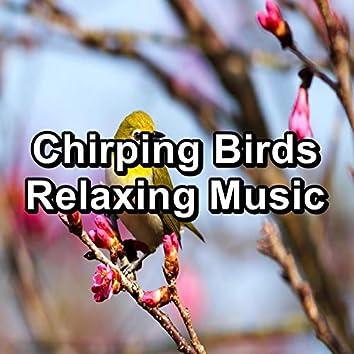Chirping Birds Relaxing Music