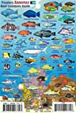 """Bahamas Reef Creatures Identification Guide Franko Maps Laminated Fish Card 4""""x6"""""""