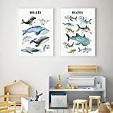 AdoDecor Wale Haie Diagramm Poster Tiere Kinderzimmer