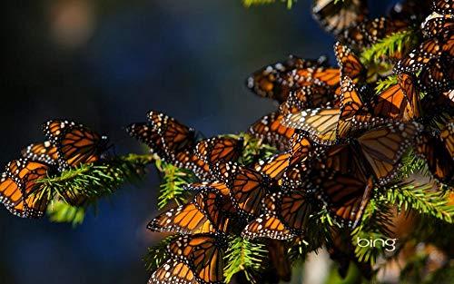 Erwachsenen puzzle 1000 Teile Klassisches Puzzle Aus Holz Puzzles Nature butterfly bugs Geschenk Intellektuelles Spiel-75X50Cm
