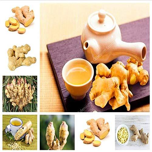 een Pack 1000 stuks Ginger Balkon Biologische groenten Ingemaakte Installatie van de bonsai Four Seasons Zingiber Plants Keuken kruiden voedsel: 300PCS