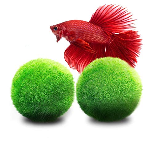 Recommended Product: LUFFY Betta Balls