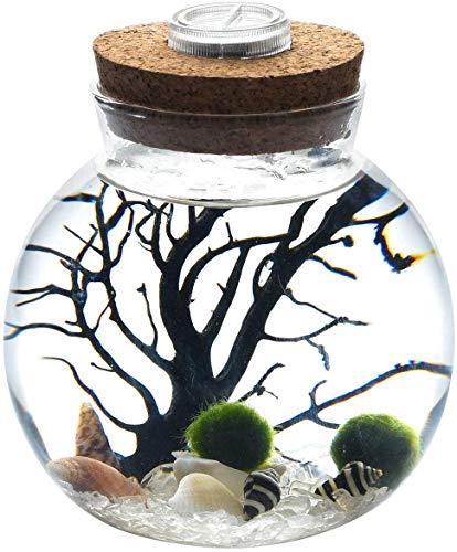 LED terrario luce notturna LED acquario marimo, vaso di vetro con 2 palline di muschio acquatico blu ciottoli di vetro ventilatore corallo ramo e conchiglie ufficio regali di compleanno (Cristal)