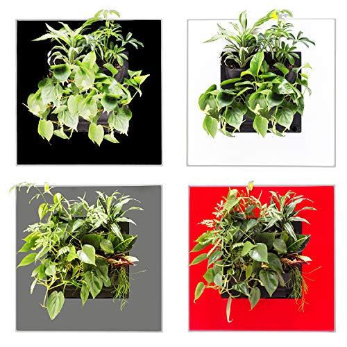 Mobilane LivePicture Go Wand deko Pflanze - echte Wandbild-Pflanze 3d-Leinwandbilder Pflanzenbilder Bilderrahmen Wanddekoration Wandbilder Wanddeko (Schwarz)