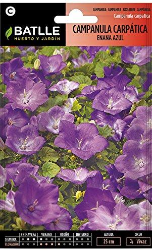 Semillas de Flores - Campanula Carpática enana azul - Batlle