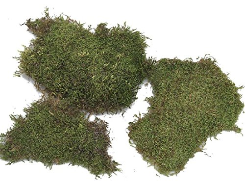 Plaque de mousse Naturel – Vert 2 kg