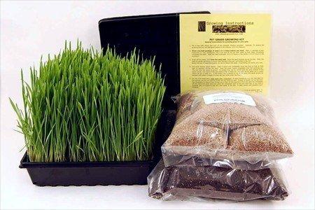 Organic Dog & Cat Wheatgrass Growing Kit for Pet -...