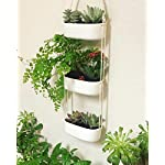 Mkono Ceramic Hanging Planter 3 Tier Indoor Wall Plant Holder for Succulent Herb Air Plant Live or Faux Plants Modern Vertical Garden , Rectangular 10 The 3-tier hanging planter is a functional and chic planter. It's a good way to let your creativity go wild, displaying the succulent, cactus, herb, air plant, ferns, orchids and other small plants with colorful pebbles, sea shell. NO plant included in this item! The ceramic wall hanging planter combine modern design and farmhouse statement that breathe life into your home, apartments, condo units, offices, living rooms, bedrooms, balcony, patios, garden, yard, even weddings, parties and more without taking too much space. The rectangle succulent pots are made of good quality white ceramic and adjustable cotton rope. Each ceramic hanging pot has draining hole in the bottom that prevent stagnant water and help you prolong the life of your precious plants.