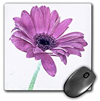 3drose LLC 8x 8x 0.25インチマウスパッド、ピンクGerbera Daisy art-nature-flowers (MP 39232_ 1)