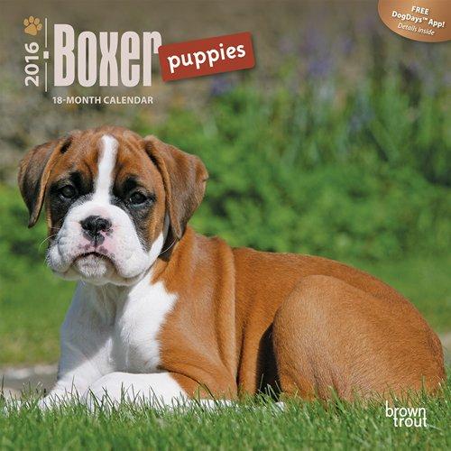 Boxer Puppies - 2016 Mini Wall Calendar 7 x 7in