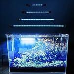 FTALGS-LED-Aquarium-Licht-Unterwasser-BeleuchtungAufsatzleuchte-Abdeckung-Wasserdicht-Lampe-Stecker-EU-fr-Fisch-Tank-mit