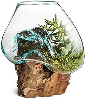 OMA Hand Blown Molten Glass & Teak Wood Terrarium/Vase/Fish Bowl - Premium Quality (6 Inch)
