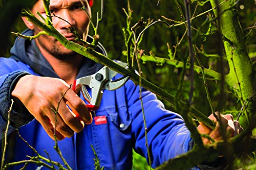 Felco Pruning Shears (F 31) - High Performance Swiss Made One-Hand Anvil Garden Pruners