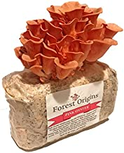 Pink Oyster Mushroom Grow Kit by Forest Origins, Beginner Mushroom Growing Kit, Top Gardening Gift, Unique Gift, Holiday Gift