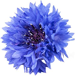 5000 Blue Bachelor Button Seeds - Large Package of one of America's Favorite Wildflowers - Blue Cornflower Seeds
