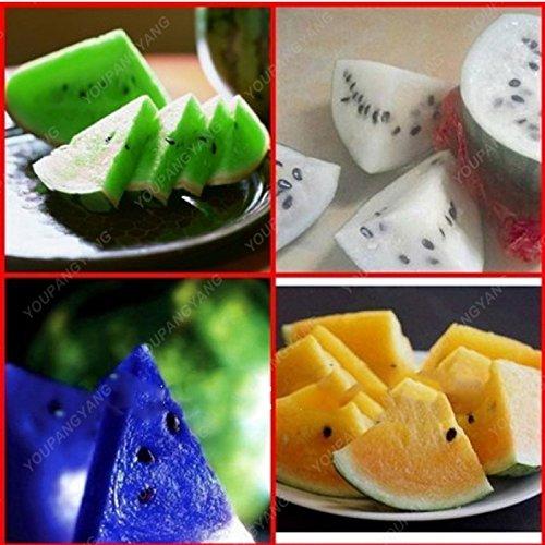 30 Melon d'eau colorée rares graines géant très grosses graines végétales comestibles pastèque Livraison gratuite Plante en pot