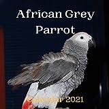 African Grey Parrot Calendar 2021