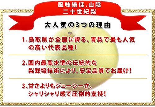 『風味絶佳.山陰 二十世紀梨(20世紀梨)7.5kg詰(22玉前後入/2L~3Lサイズ) 鳥取県産 赤秀(ご贈答用)』の5枚目の画像