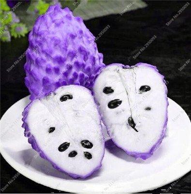 10pcs/sac de sucre rares Graines Bonsai Annona squamosa Plante en pot tête Fruit de Bouddha Crème anglaise Planta Decor Garden 7