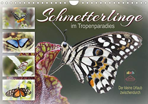 Schmetterlinge im Tropenparadies (Wandkalender 2022 DIN A4 quer)