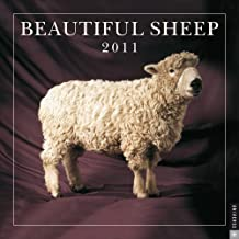 Beautiful Sheep: 2011 Wall Calendar by Kathryn Dun (2010-08-09)