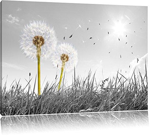 Pusteblumen auf Wiese schwarz/weiß Format: 120x80 auf Leinwand, XXL riesige Bilder fertig gerahmt mit Keilrahmen, Kunstdruck auf Wandbild mit Rahmen, günstiger als Gemälde oder Ölbild, kein Poster oder Plakat