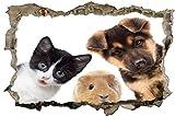 DesFoli Pets Katze Hund Hamster Pets 3D-Optik Wandtattoo 70 x 105 cm Wandbild Sticker Aufkleber D125