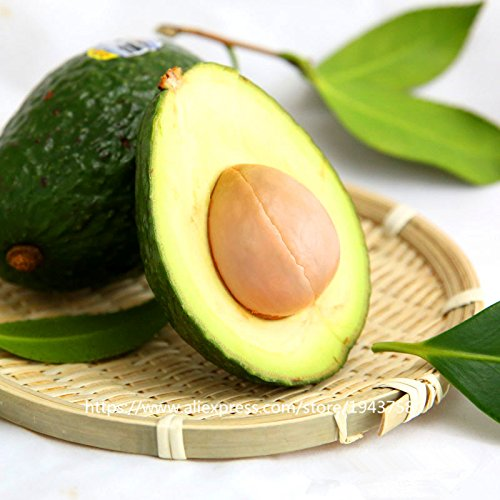 10 piezas de fruta verde Aguacate semillas muy delicioso Persea americana Mill pera Semilla fácil de cultivar, semillas de frutas para Inicio de plantas de jardín