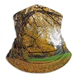 Linger In Otoño Parque otoñal con Gran Roble Antiguo y Hojas caducas Verdor Tierra Amarillo Marrón Verde Cuello más cálido Polaina