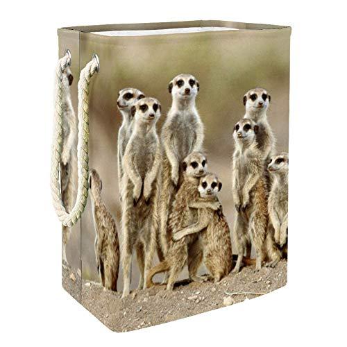 NOBRAND Tier-Erdmännchen-Wäschekorb für Wäschekorb, integriertes Futter mit abnehmbaren Klammern, faltbarer Wäschesammler für Spielzeug und Kleidung