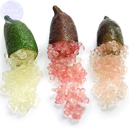 AMZT - Nuovo Finger misto Lime Green Rosso Rosa Frutta, Ice Finger frutta Lime seme raro impianto Casa Giardino Balcone Rosso 20 + Seeds