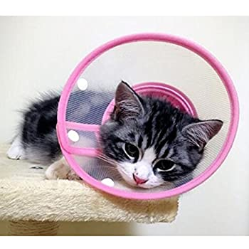 Best cat cone Reviews