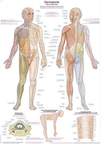 Anatomische Lehrtafel