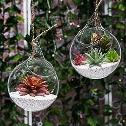 Set of 2 Decorative Clear Glass Globe