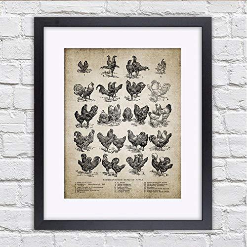 Non-branded artaslf Stampe nordiche su Tela Stampe nordiche Razze di Pollo Vintage Allevamento di pollame Gallina Vintage Poster Decorazioni per la casa Immagini di Pittura- 60x80 cm Senza Cornice