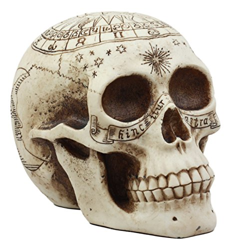 Ebros Gift Solar Astrology Celestial Skull Statue Ancient Prophecy Cartography Relic Map Skull Cranium Decorative Figurine Ossuary Macabre Skulls and Skeletons Decor