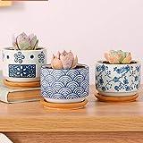 6 x 7.5 cm Pentola succulenta in stile giapponese Base Set Succulente Vaso per piante Cactus Vaso per fiori Vaso per fiori Fioriera Contenitore Bonsai Vasi con un buco Perfetto Idea regalo 3 in Set