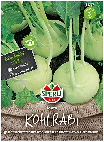 81147 Sperli Premium Kohlrabi Samen Lanro | Aromatisch Zart | nicht holzig | Schossfest | Kohlrabi Saatgut