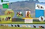 WAS IST WAS Pferde und Ponys: Reiten, Fohlen, Pferdesprache, Turniere, Zucht und Pflegepferd! (WAS IST WAS Edition) - 15