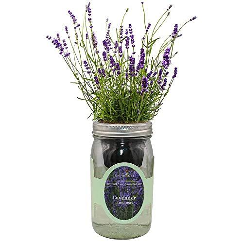 Environet Hydroponic Herb Growing Kit, Self-Watering Mason Jar Herb Garden Starter Kit Indoor, Windowsill Herb Garden, Grow Your Own Herbs from Seeds (Lavender Munstead)